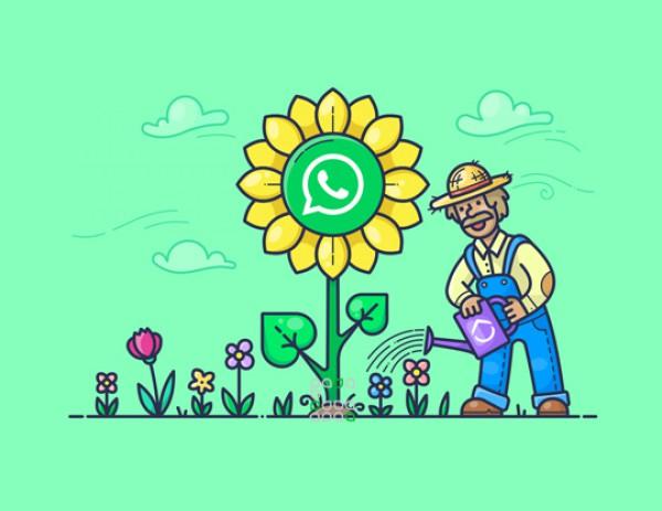 Կատալոգներ WhatsApp-ում: Նոր հնարավորություն փոքր բիզնեսի համար